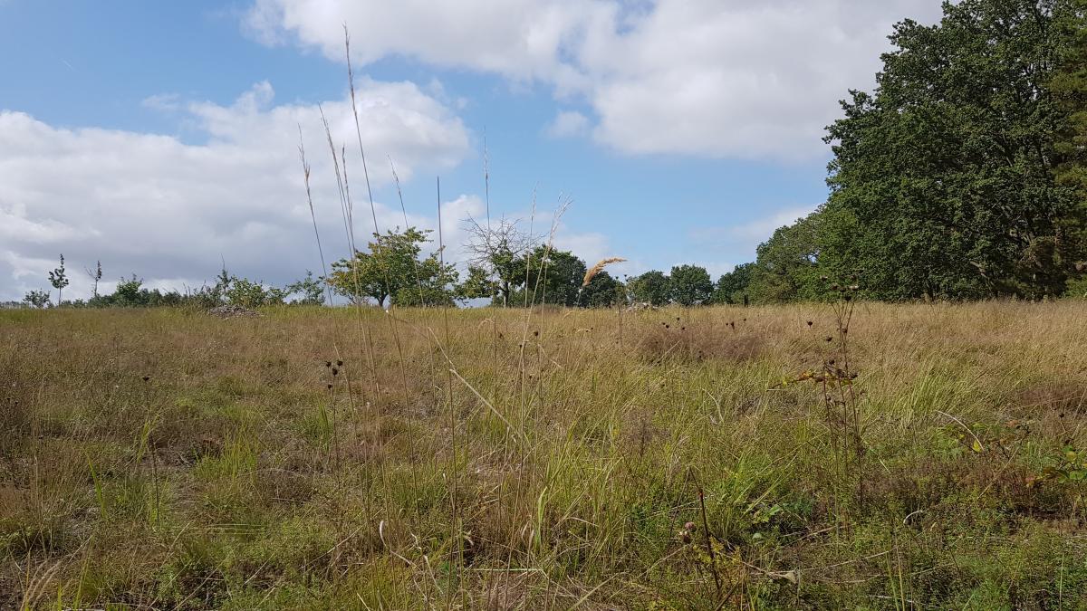 artenreicher Trockenrasen